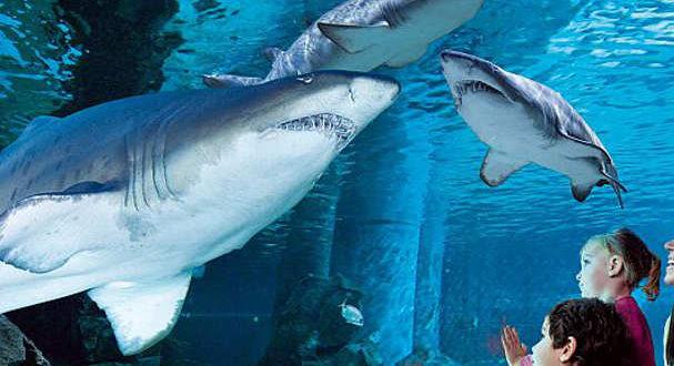 granfondo-degli-squali-5-jpg