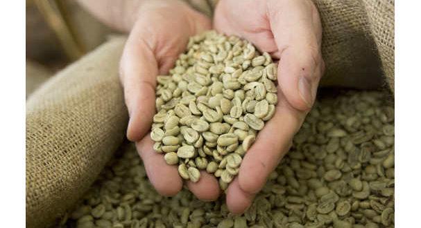 le-proprieta-del-caffe-verde-1-jpg